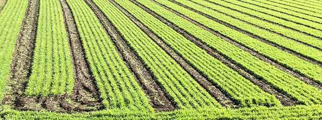 トヨタマ健康食品株式会社の原料大麦若葉粉末(国産)、商品名大麦若葉粉末BG-200(国産)