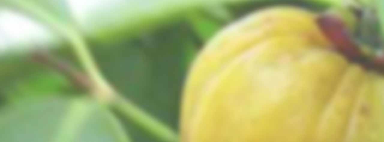 株式会社サビンサジャパンコーポレーションの原料ガルシニアカンボジア抽出物、商品名ガーシトリン®