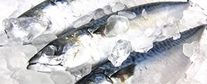 株式会社中原の原料DHA含有精製魚油、商品名DHAオイル(55)