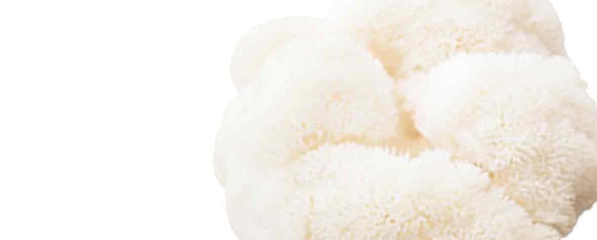 チハヤ株式会社の原料山伏茸子実体末(日本産)、商品名山伏茸子実体滅菌末(日本産)
