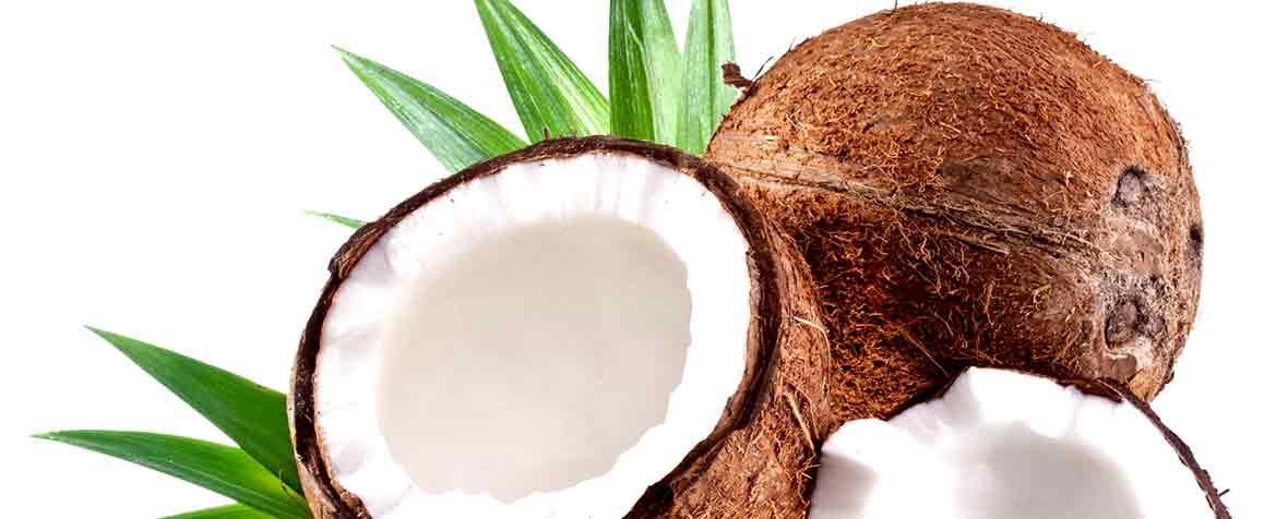 バイオアイ株式会社の原料ココナッツオイル、商品名フィリピン産:オーガニック(有機JAS)エクストラ ヴァージン ココナッツオイル