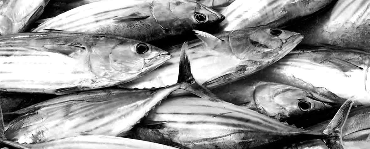 備前化成株式会社の原料精製魚油、商品名DHA70 BAPT