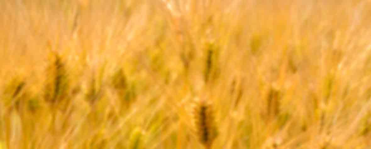 株式会社サビンサジャパンコーポレーションの原料穀物発酵エキス、商品名ダイジェザイム®