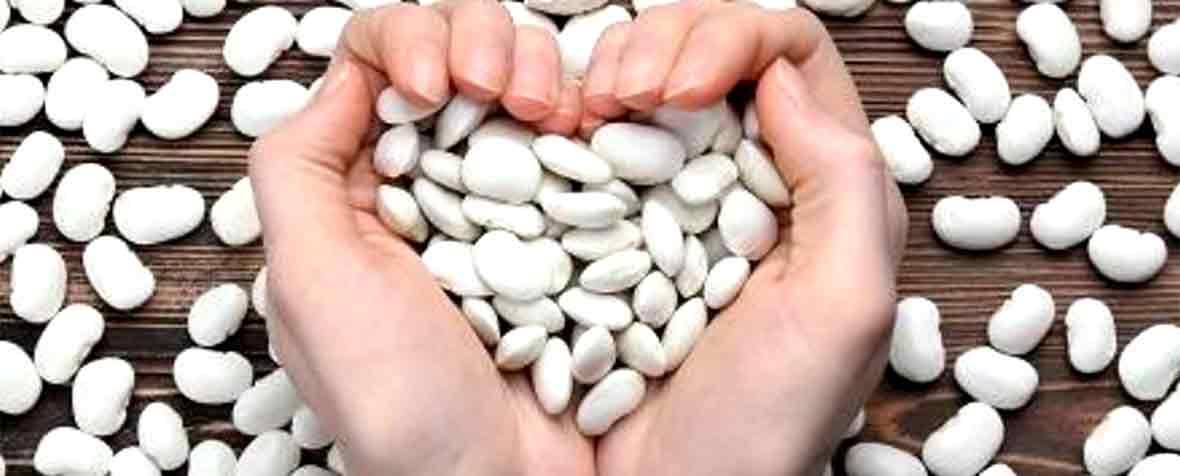 株式会社サビンサジャパンコーポレーションの原料白インゲン豆抽出物、商品名ファベノールフォース®MAX