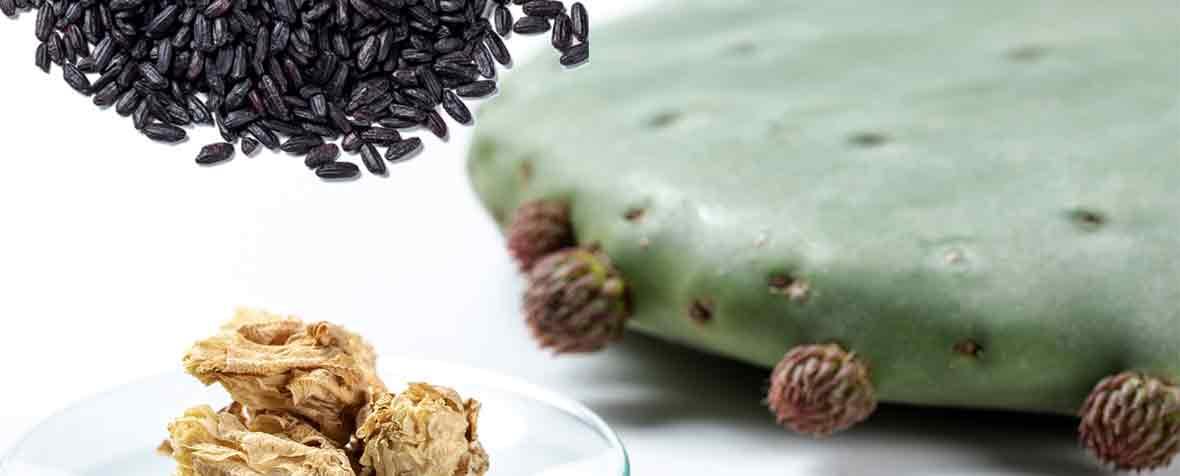 IMCDジャパン合同会社の原料ブラックライスエキス、ウチワサボテンの花エキス、商品名ACTRISAVE