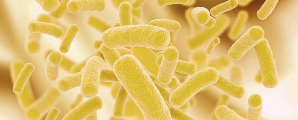 ILS株式会社の原料殺菌乳酸菌、商品名乳酸菌PS23
