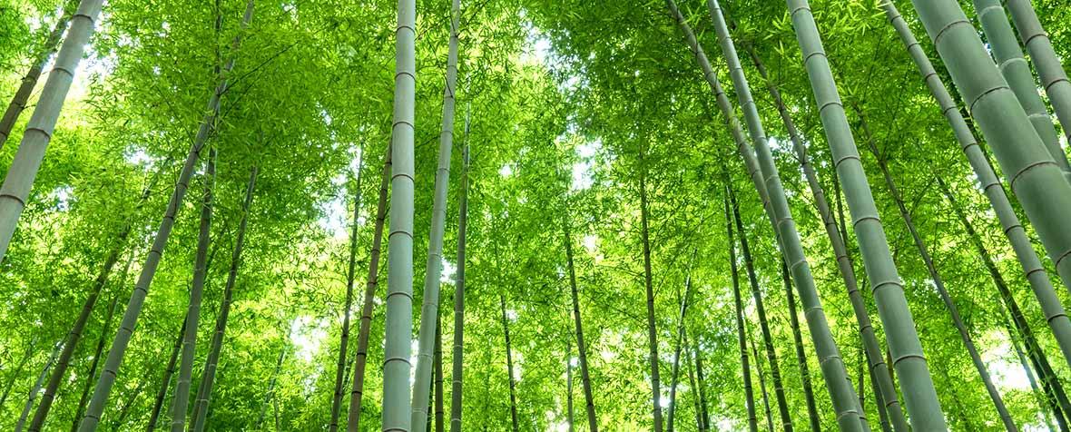 三井製糖株式会社の原料食物繊維(植物繊維、竹繊維、竹ファイバー)、商品名UNICELL® BF