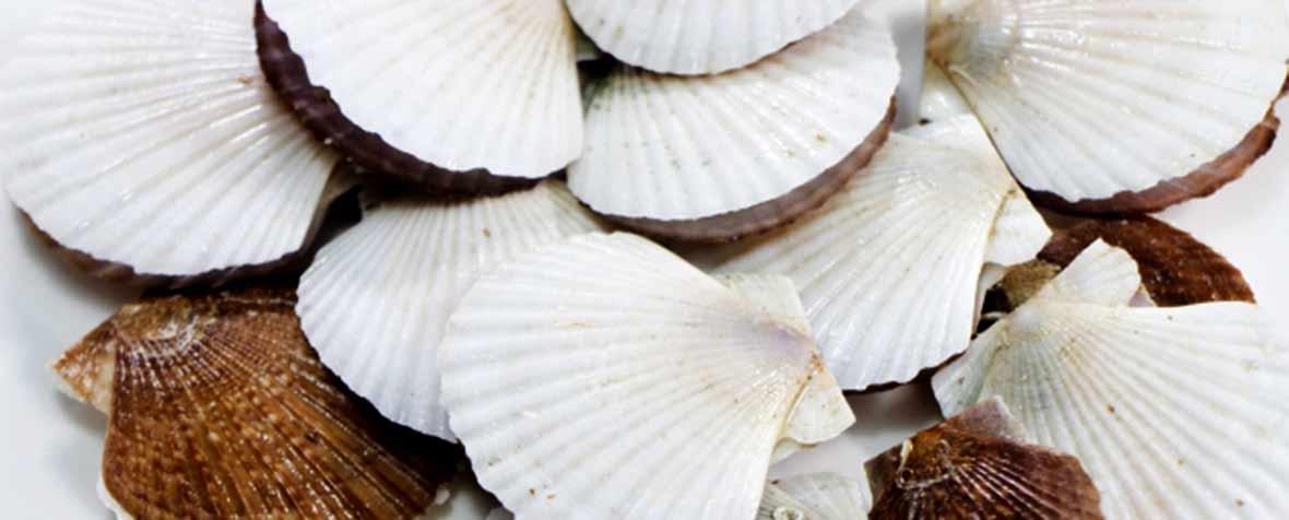 株式会社エヌ・シー・コーポレーションの原料焼成カルシウム、商品名貝殻焼成カルシウム