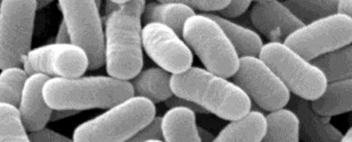 ミヤコ化学株式会社の原料乳酸菌(殺菌)、商品名乳酸菌YM2-2