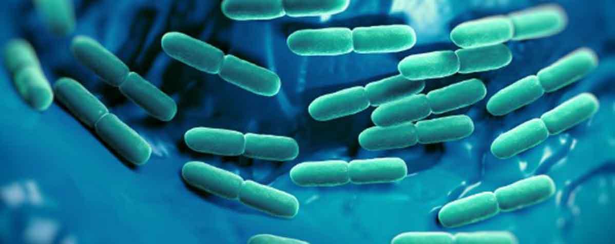 ミヤコ化学株式会社の原料乳酸菌末(生菌)またはビフィズス菌末(生菌)、商品名HN019™